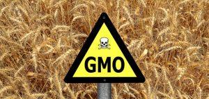 gmo_sign_crops_735_350-735x350